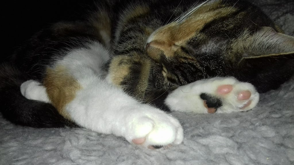My calico girl Mushanga sleeping
